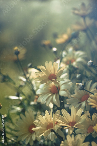 canvas print picture Yellow daisies with soft filtered light