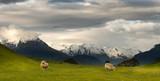 Fototapety Landscape of New Zealand