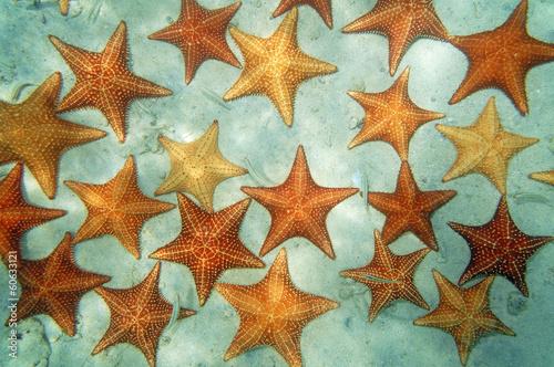 Leinwanddruck Bild Sandy seabed with starfish in the Caribbean sea