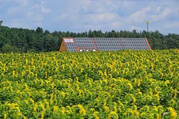 Sonnenblumenfeld und Solaranlage 02