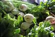 farmers market fennel