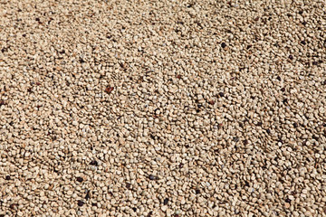 white coffee beans