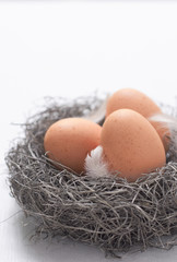 Speckled chicken eggs and feathers