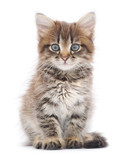 Kitten on a white background - 60638523