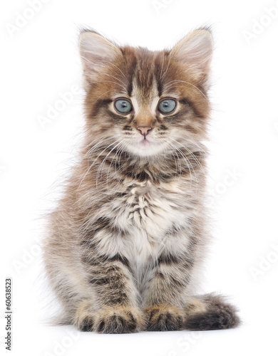 Foto op Plexiglas Kat Kitten on a white background