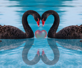 Black Swan and Heart shape