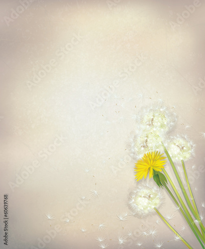 Vector dandelion flowers on  paper background.