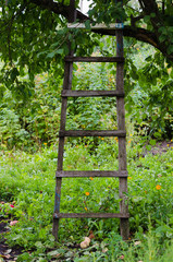 accommodation ladder to fruit tree in green garden