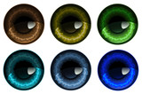 Vector illustration of human pupils in six colors
