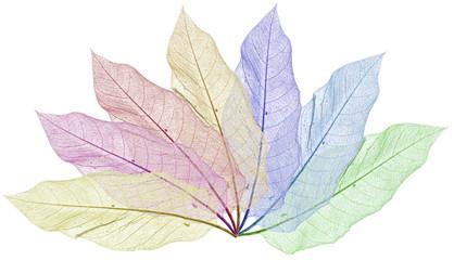 feuilles squelettes décoratives