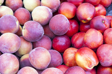 Placer ripe peaches and nectarines