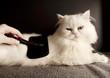 Combing cat's fur