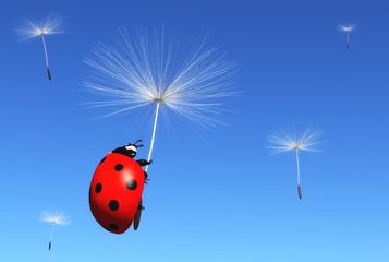 Floret carries a ladybug