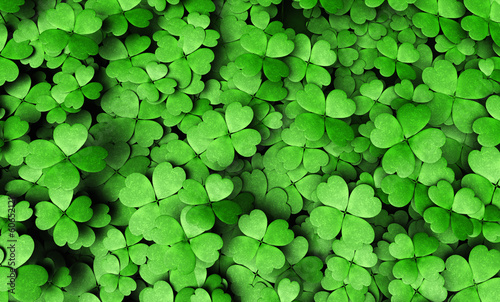 Leinwandbild Motiv Expanse of four-leaf clovers