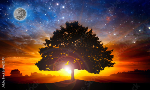 Tuinposter Zonsondergang Space tree