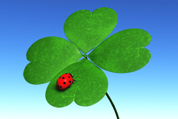 Ladybug on a four-leaves clover