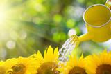 Fototapety Sunflower border