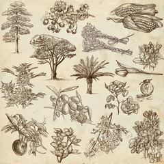 Trees, Plants and Flowers  around the World - drawings on paper