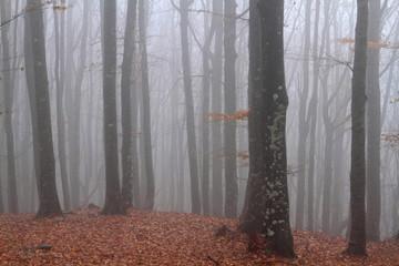 foresta del casentino appennino tosco emiliano
