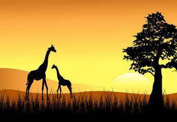 Sunset with Mom & Baby Giraffe