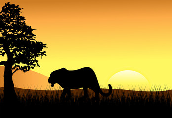 Sunset with Female Stalking Lion