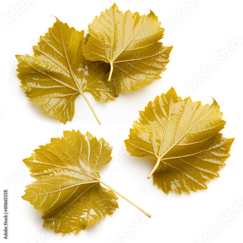 Grape leaves for dolma. Collection on white background