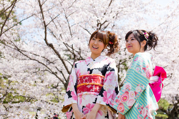 japanese kimono woman and cherry blossoms