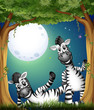 Two zebras at the forest