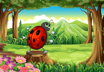 A ladybug at the forest standing above the stump