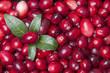 cranberries - 60672541
