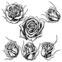 Roses Line Work