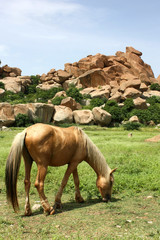 India - Hampi / horses