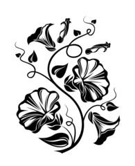 Bindweed black silhouette. Vector illustration.