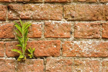 Wall Background With Weeds