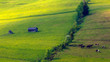 Obrazy na płótnie, fototapety, zdjęcia, fotoobrazy drukowane : Na Wiosennych Łąkach Pienin
