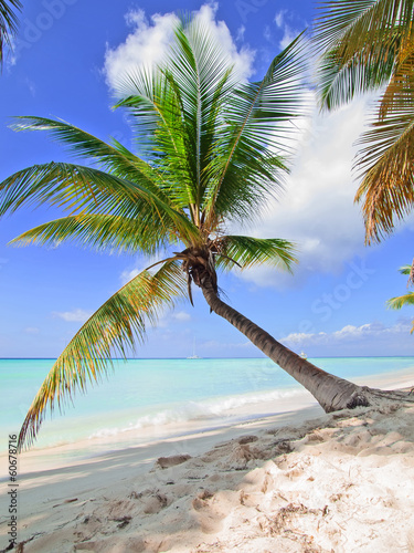 tropical beach in Dominican republic.