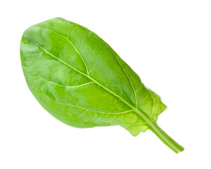 Green leaf of spinach isolated on white background