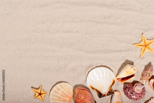 seashells and starfish on a sandy background