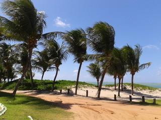 Coqueiros da Praia Formosa