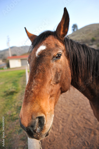 Portrait of a horse head outdoors in field