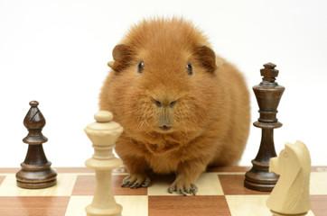 Partie Schach?