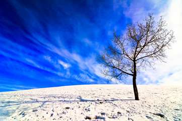 Lone tree on snowy hill with bright blue sky