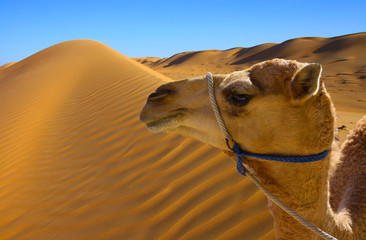 Desert dunes with camel face