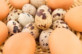 chicken eggs and quail eggs