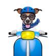 crazy speed dog
