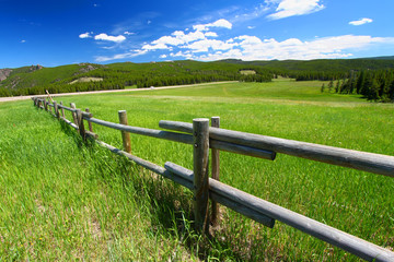 Bighorn National Forest Fenceline