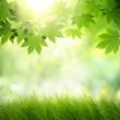 Obrazy na płótnie, fototapety, zdjęcia, fotoobrazy drukowane : Natural green background