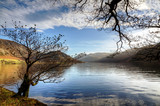 Two trees by Ennerdale Water