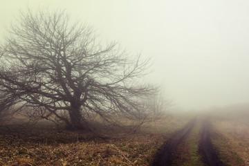 quiet forest glade scene