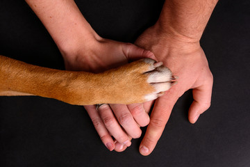 Dog paw on human hands